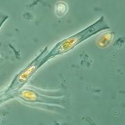 plankton-news